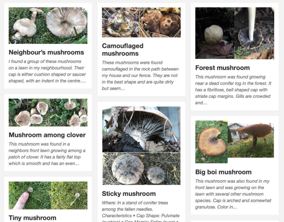 screen shot of website of small photo boxes of mushroom varieties with short text explanations under each. The photo boxes are clickable.